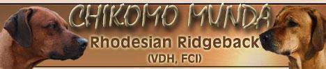 Chikomo Munda Rhodesian Ridgeback's