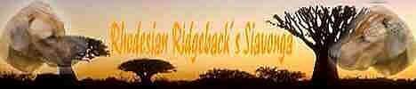 Rhodesian Ridgebacks Siavonga