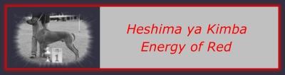 CH. Heshima ya Kimba Energy of Red