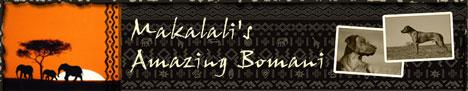 CH Makalali's Amazing Bomani