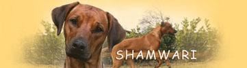 Shamwari (VDH/FCI)