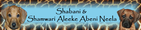 Shabani & Shamwari Aleeke Abeni Neela