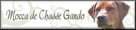 Mocca de Chasse Gando