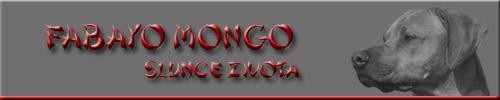 Fabayo Mongo Slunce Zivota