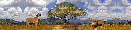 Matumaini Rhodesian Ridgeback VDH   DZRR