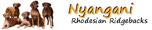 NYANGANI Rhodesian Ridgebacks
