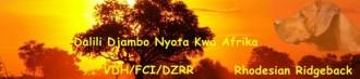 Dalili Djambo Nyota kwa Afrika