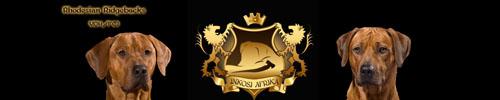 Inkosi Afrika