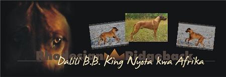 Dalili B.B. King Nyota kwa Afrika
